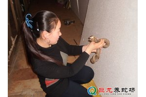 女学员养殖的眼镜蛇