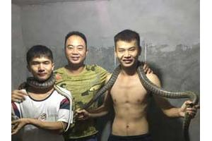 历届学员实践养蛇(二)