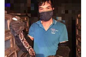 年轻学员养蛇的五步蛇