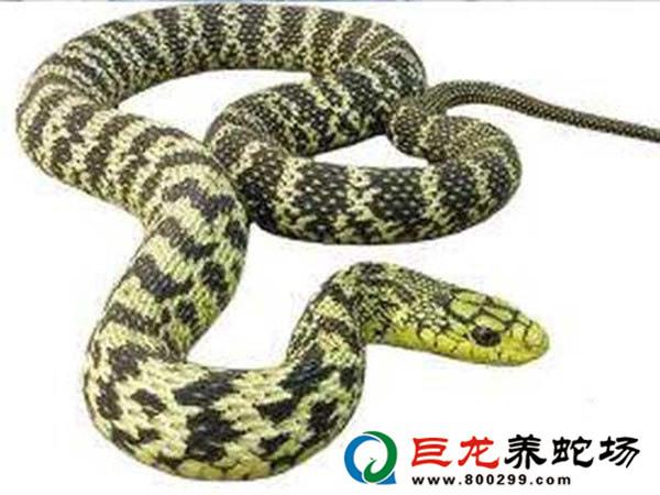 养蛇技术指导