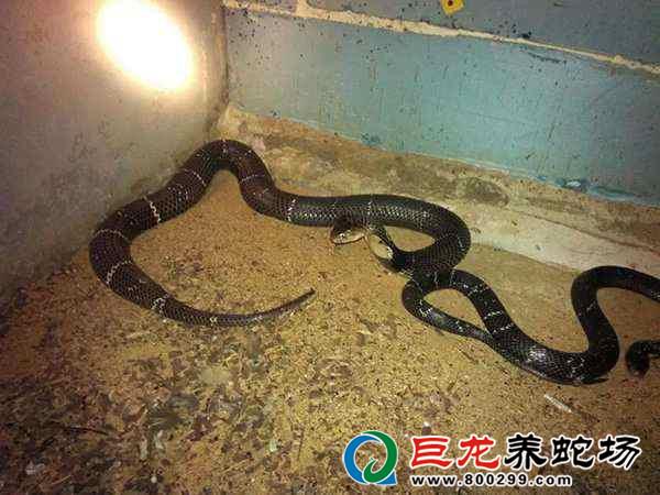 广西养蛇培训