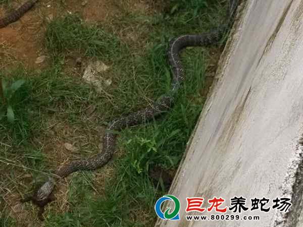 养蛇赚钱吗