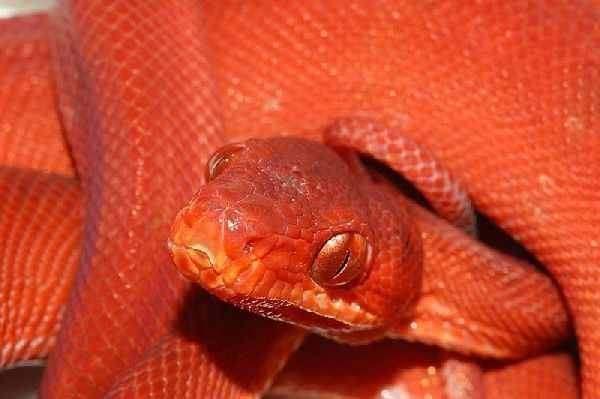 蟒蛇专业养蛇培训