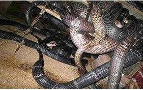 种蛇的挑选方法(基本功)