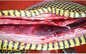 蛇病的预防、诊断和治疗方法