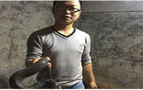 蛇健康状况的辨别
