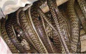 养蛇的四季管理技术